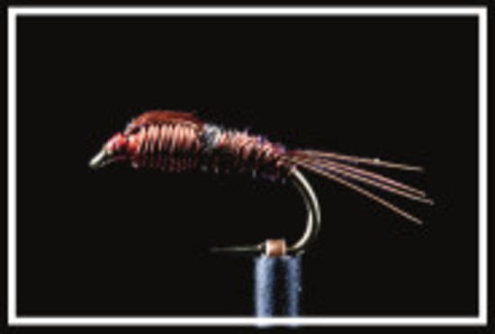 Sawyers Pheasant Tail Nymph